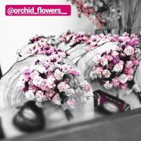 @orchid_flowers__