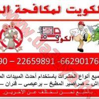 مكافحة الحشرات والقوارض بالكويت